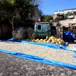 Drying pumpkin seeds, Cappadocia, Turkey
